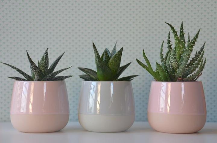 Best Indoor Plants For YourHome